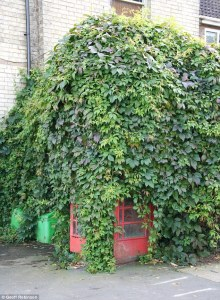 [Photo by Geoff Robinson] http://www.dailymail.co.uk/news/article-2242427/Time-hedge-trimmer-Villagers-overgrown-phone-box-haircut-ivy-blocked-door.html